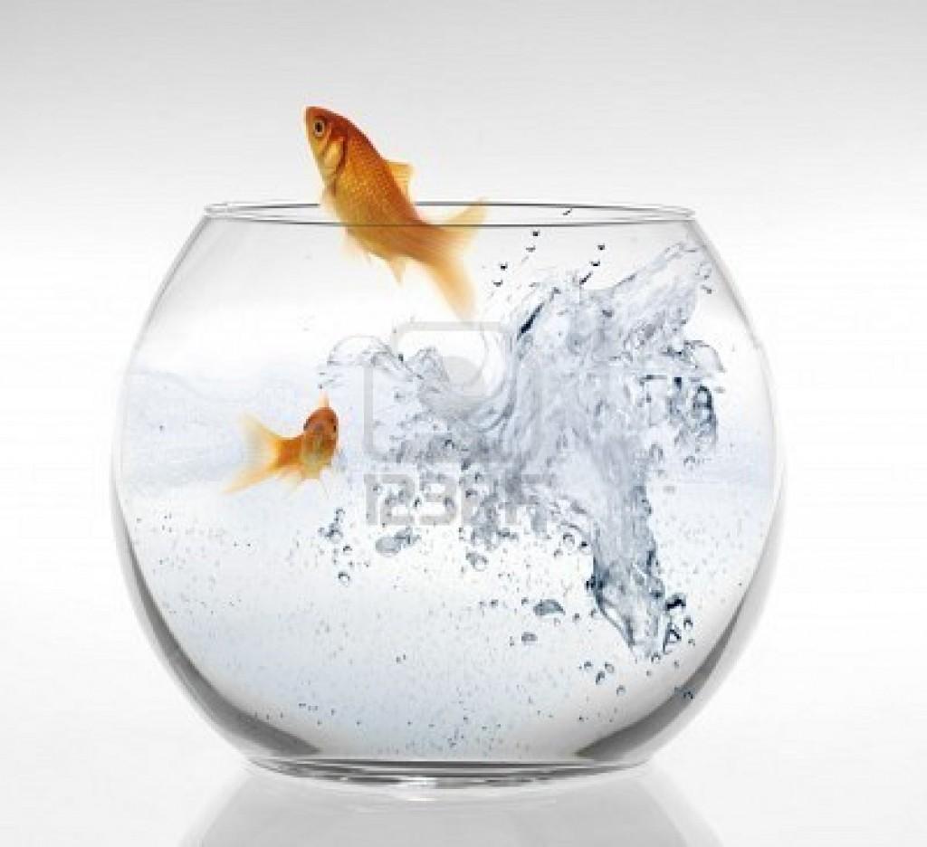 Foto pesce rosso for Quanto vive un pesce rosso